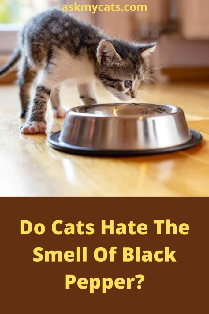 Do Cats Hate The Smell Of Black Pepper?