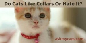 Do Cats Like Collars Or Hate It?