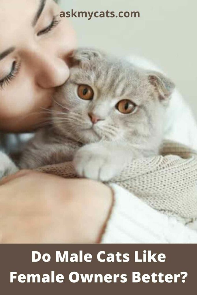 Do Male Cats Like Female Owners Better?