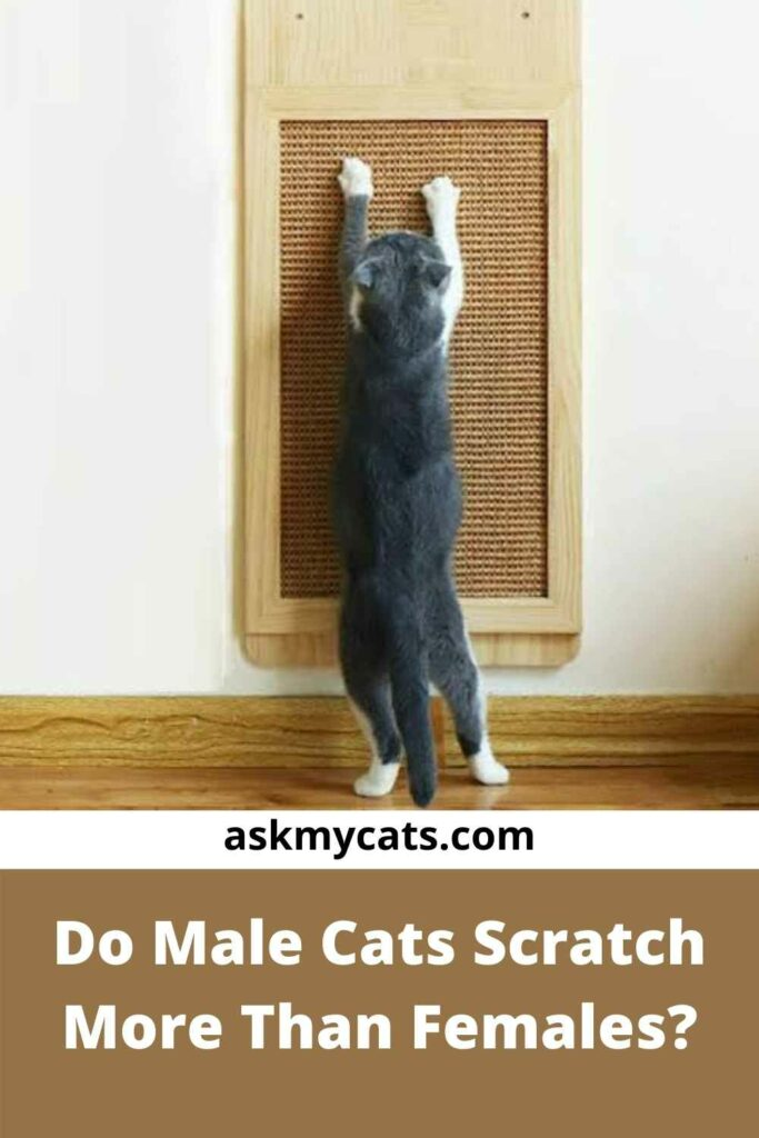 Do Male Cats Scratch More Than Females?