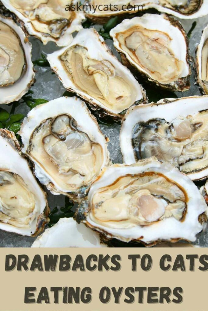 drawbacks to cats eating oysters