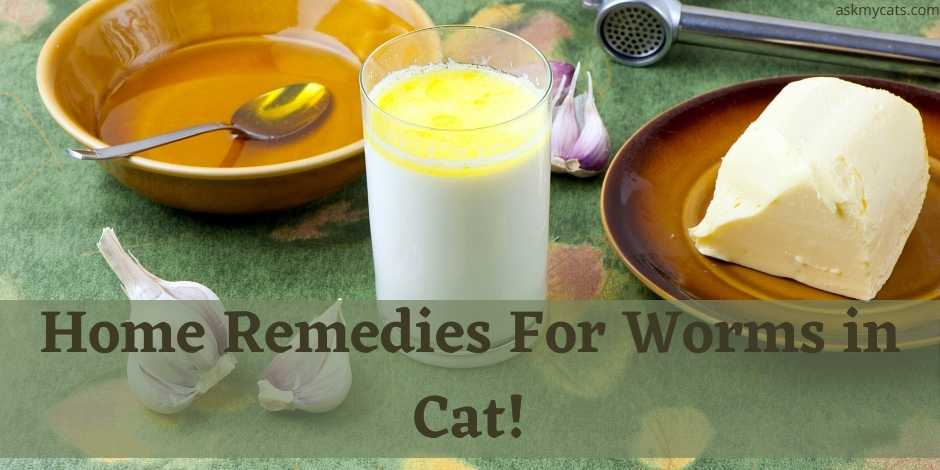 Home Remedies For Worms in Cat!