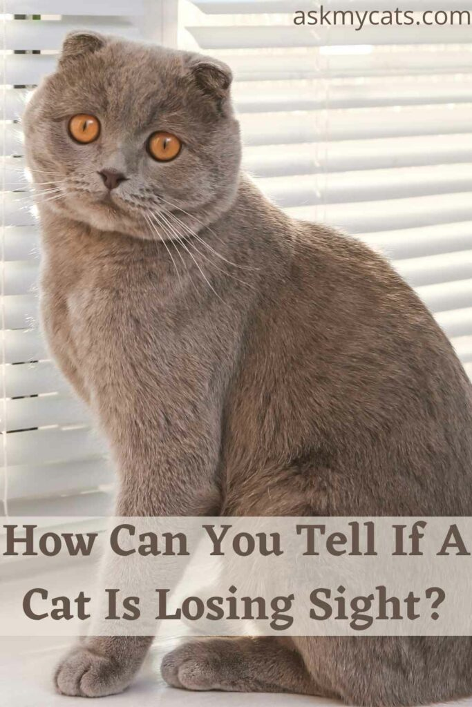 How Can You Tell If A Cat Is Losing Sight?