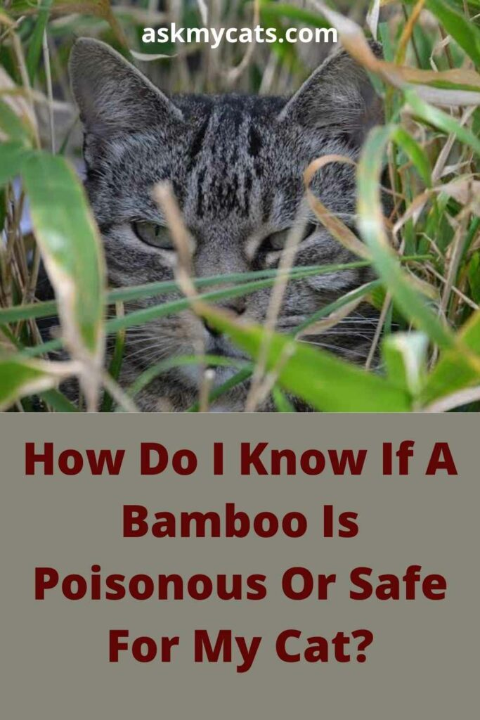How Do I Know If A Bamboo Is Poisonous Or Safe For My Cat?