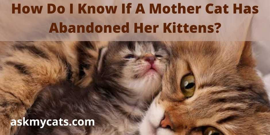 How Do I Know If A Mother Cat Has Abandoned Her Kittens?