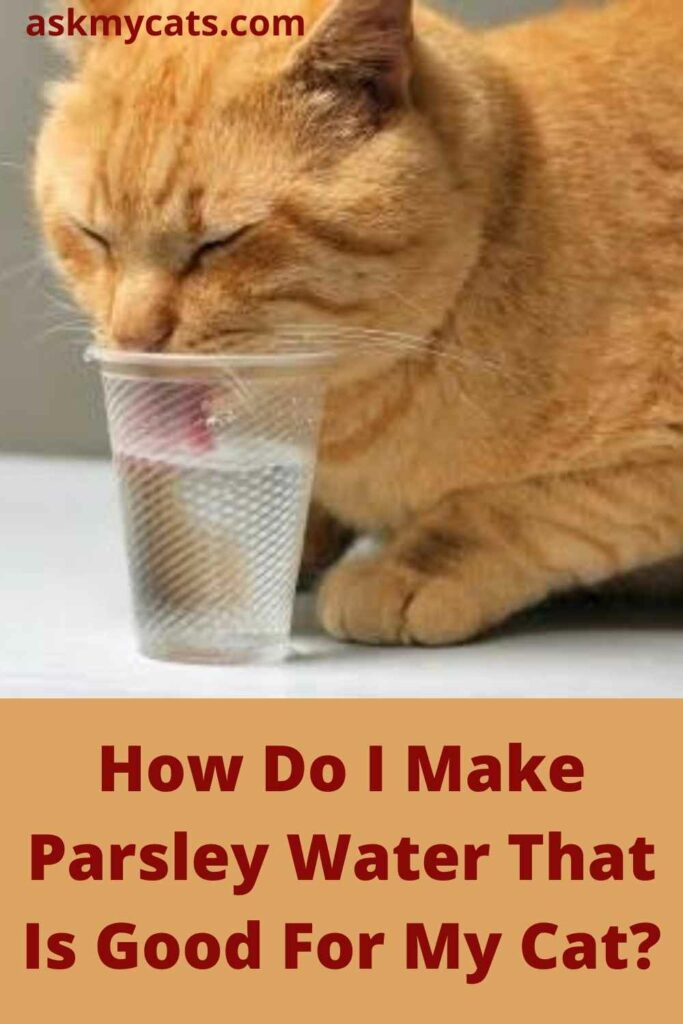 How Do I Make Parsley Water That Is Good For My Cat?