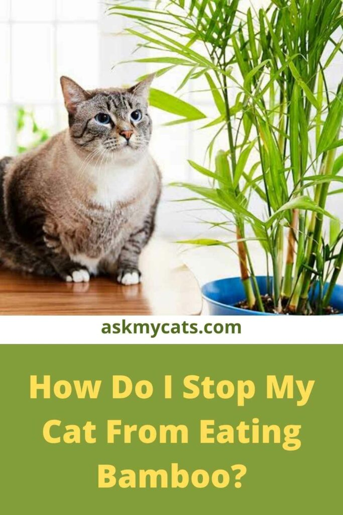 How Do I Stop My Cat From Eating Bamboo?