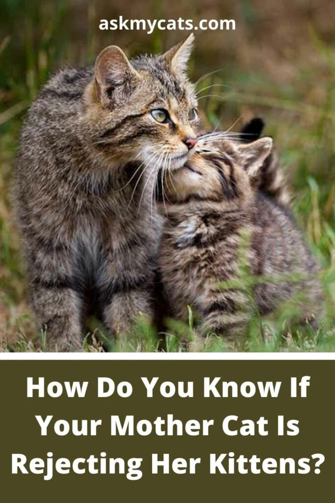 How Do You Know If Your Mother Cat Is Rejecting Her Kittens?