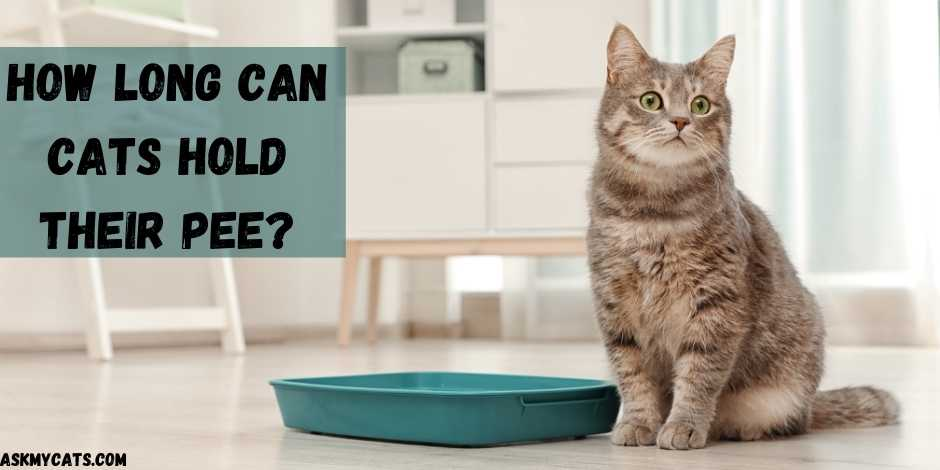 How Long Can Cats Hold Their Pee?