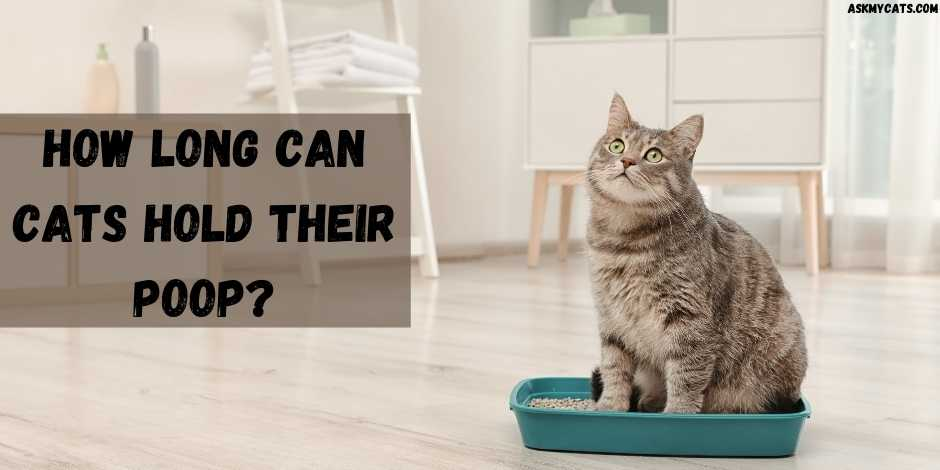 How Long Can Cats Hold Their Poop?