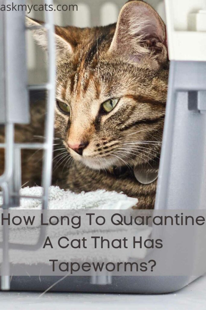 How Long To Quarantine A Cat That Has Tapeworms?