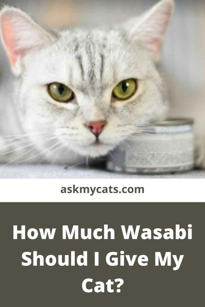 How Much Wasabi Should I Give My Cat?