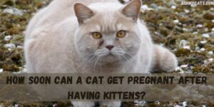 How Soon Can A Cat Get Pregnant After Having Kittens?