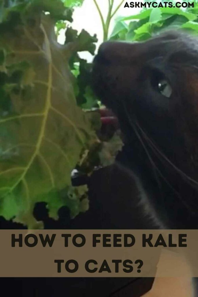 How To Feed Kale To Cats?