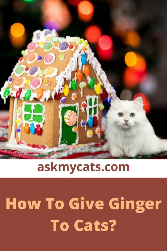 How To Give Ginger To Cats?