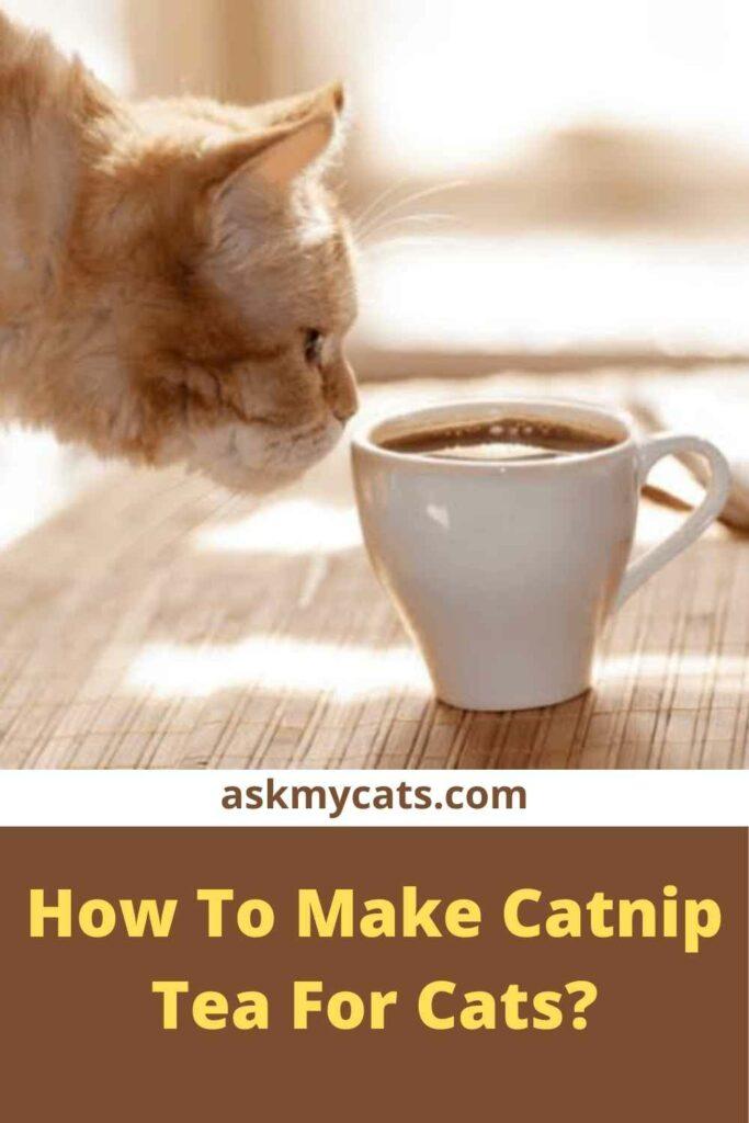 How To Make Catnip Tea For Cats?