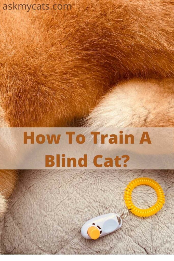 How To Train A Blind Cat?