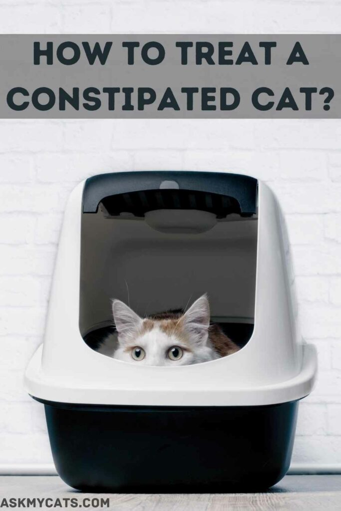 How To Treat A Constipated Cat?