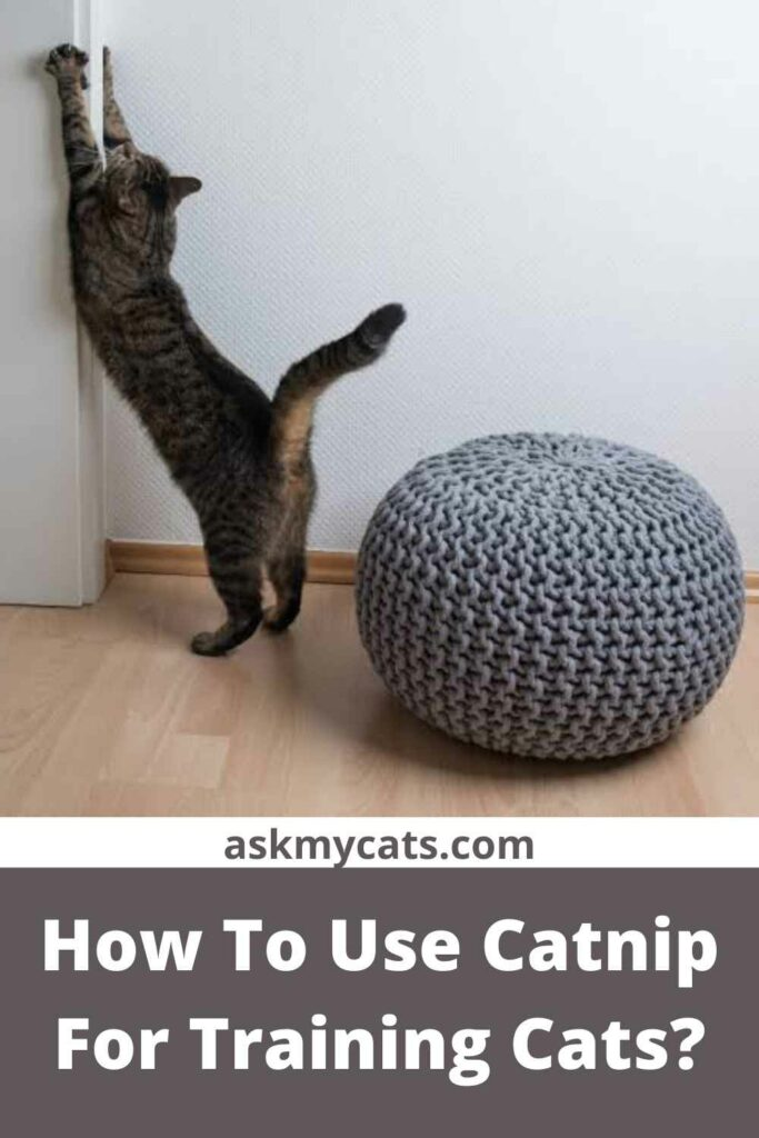 How To Use Catnip For Training Cats?
