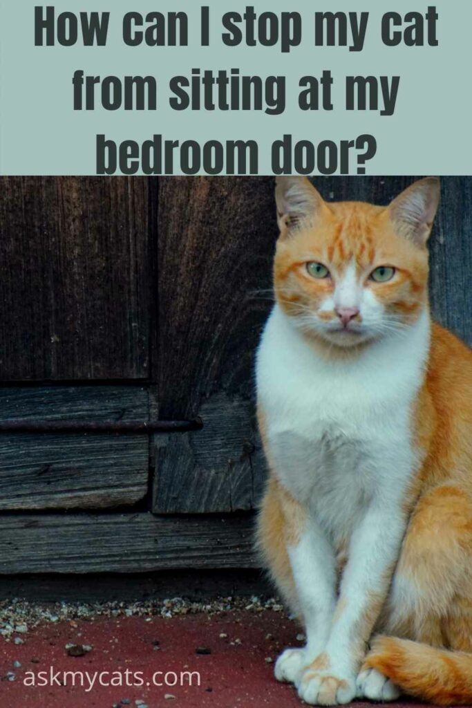 How Can I Stop My Cat From Sitting At My Bedroom Door?