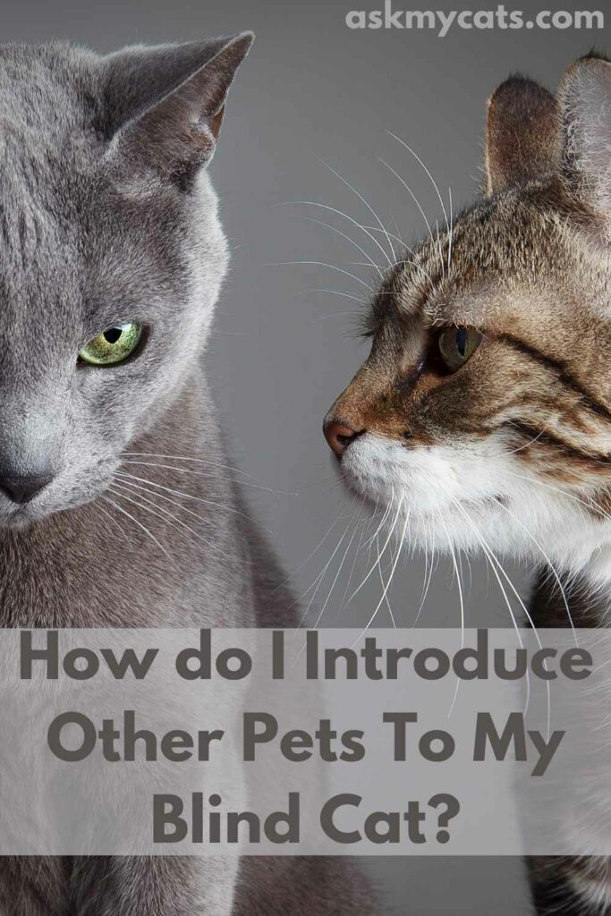 How do I Introduce Other Pets To My Blind Cat?