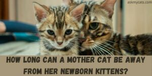 How Long Can A Mother Cat Be Away From Her Newborn Kittens?