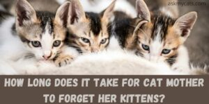 How Long Does It Take For Cat Mother To Forget Her Kittens?