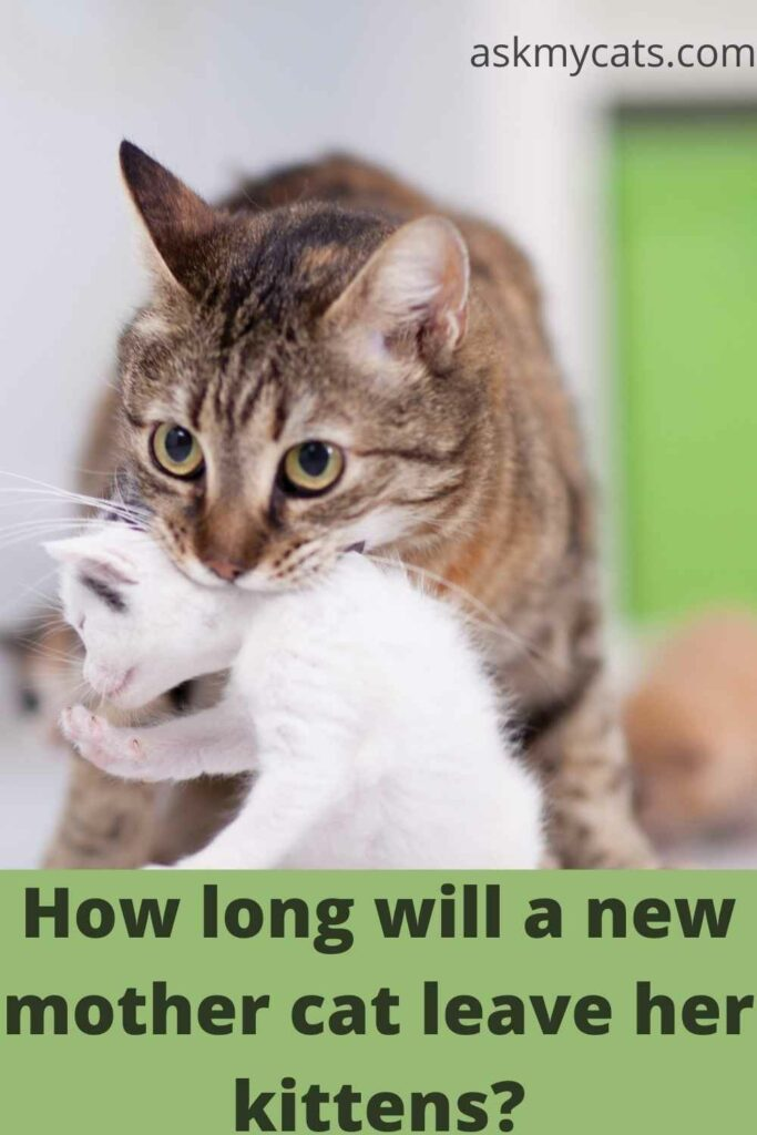 How-long-will-a-new-mother-cat-leave-her-kittens