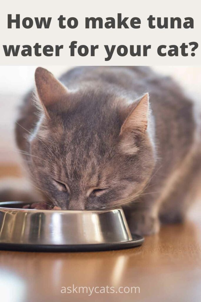 how to make tuna water for your cat