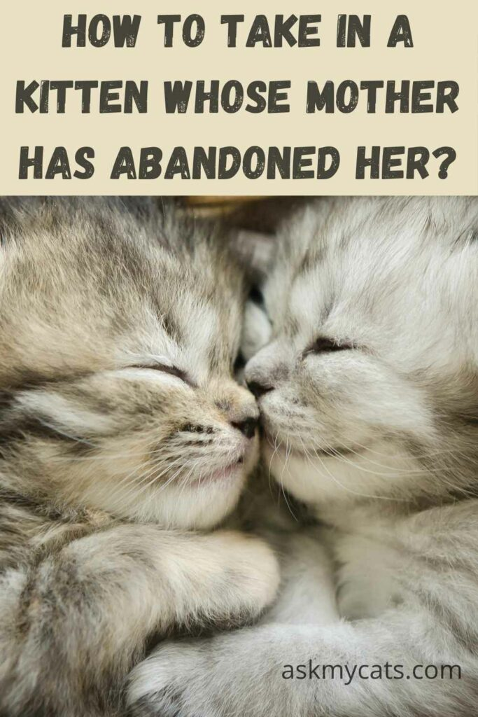 How To Take In A Kitten Whose Mother Has Abandoned Her?