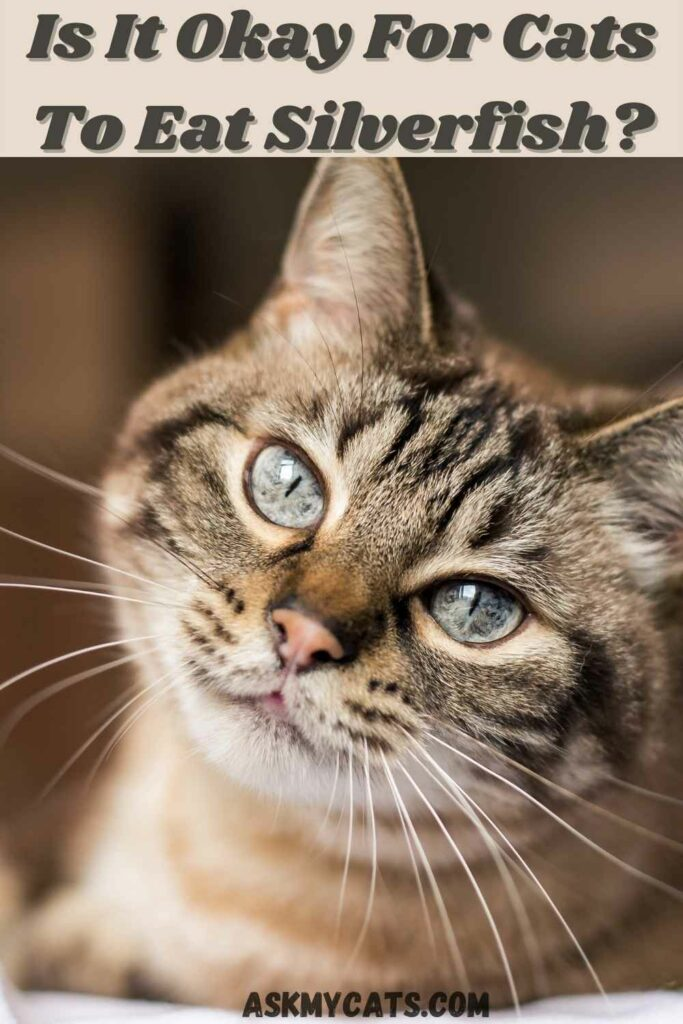 is it okay for cats to eat silverfish?