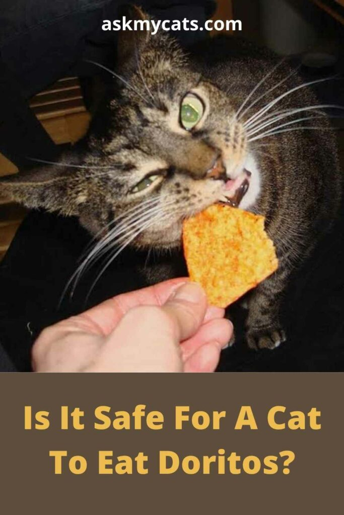 Is It Safe For A Cat To Eat Doritos?