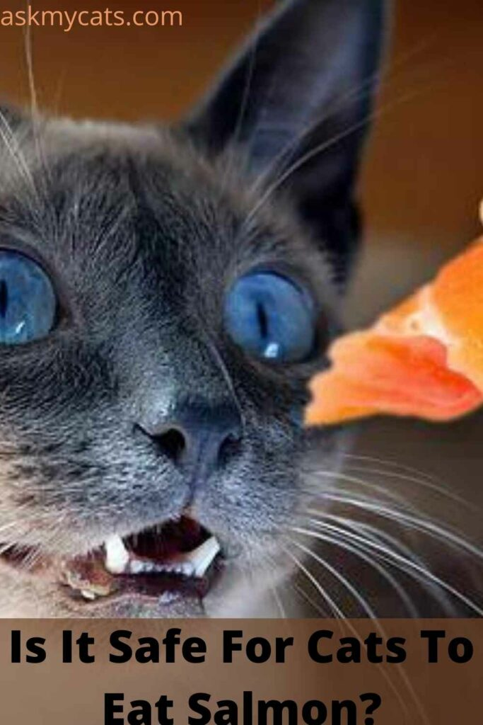 Is It Safe For Cats To Eat Salmon?