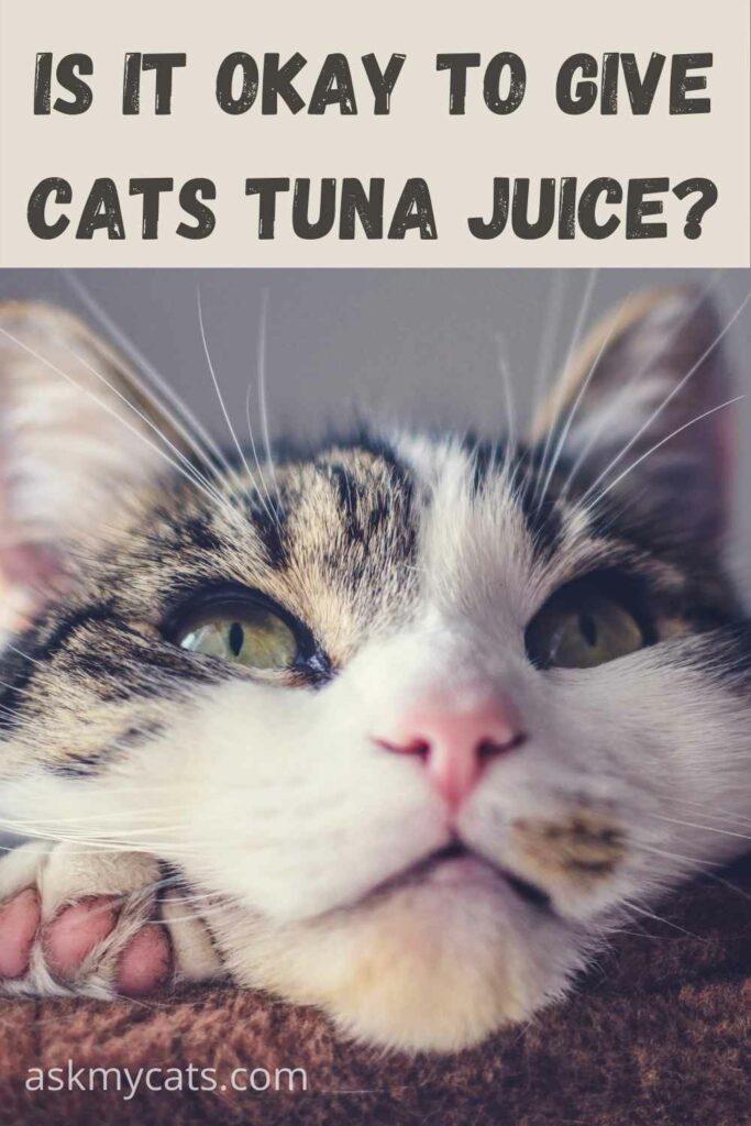 Is-It-okay-to-give-cats-tuna-juice