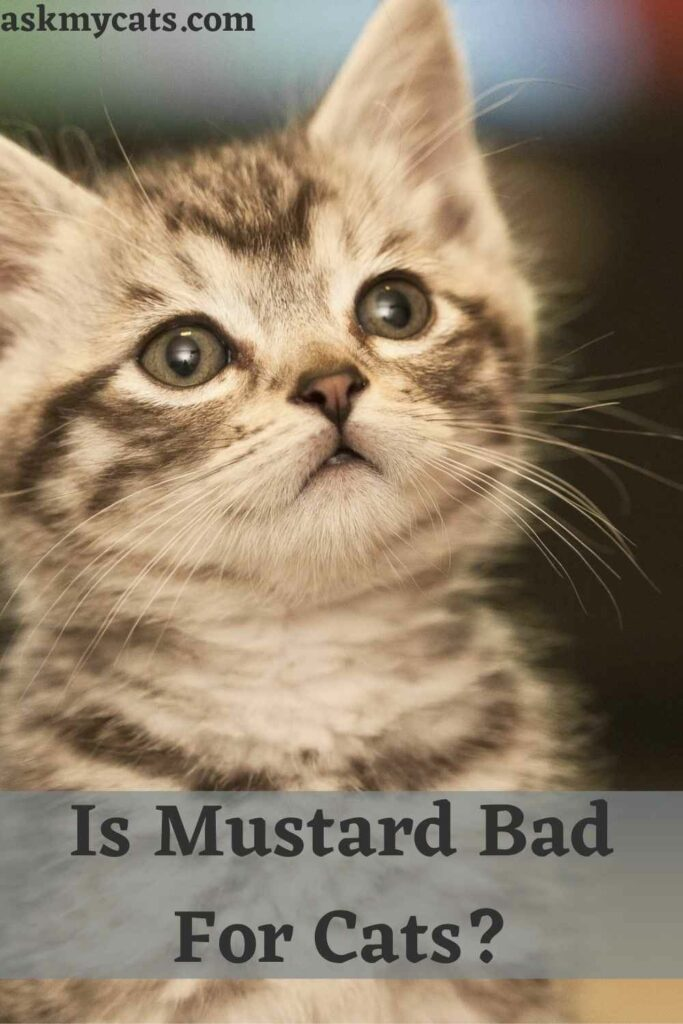 Is Mustard Bad For Cats?