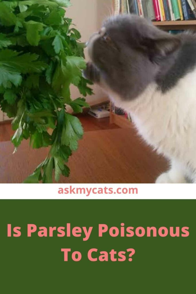 Is Parsley Poisonous To Cats?