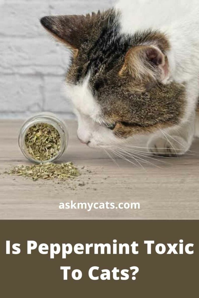 Is Peppermint Toxic To Cats?