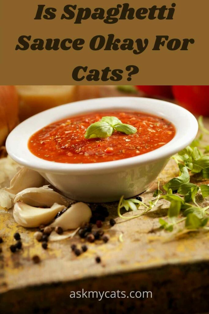 is  spaghetti sauce okay for cats?