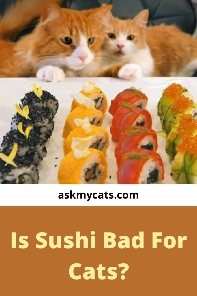 Is Sushi Bad For Cats?