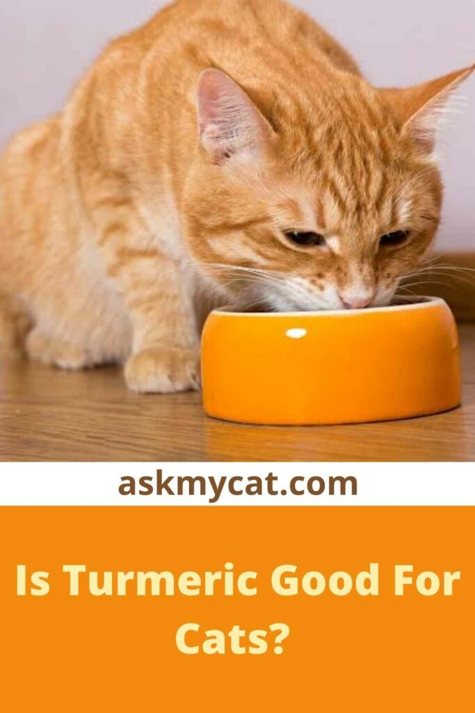 Is Turmeric Good For Cats?