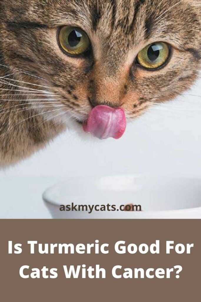 Is Turmeric Good For Cats With Cancer?