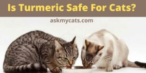 Is Turmeric Safe For Cats? How Do I Give Turmeric To My Cat?
