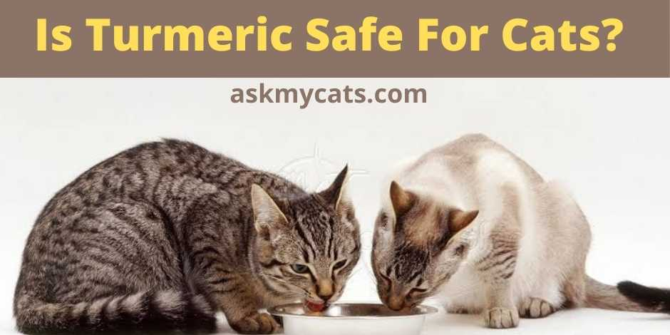 Is Turmeric Safe For Cats?
