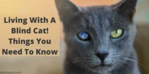 Living With A Blind Cat! Things You Need To Know