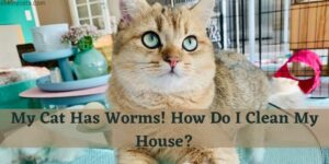 My Cat Has Worms! How Do I Clean My House?