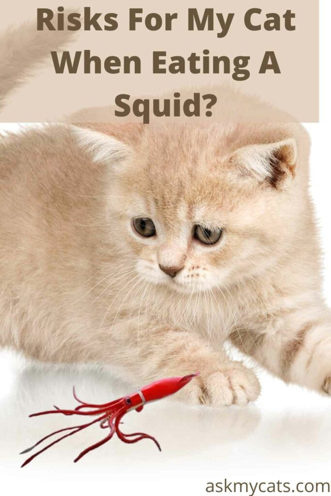 Risks For My Cat When Eating A Squid?