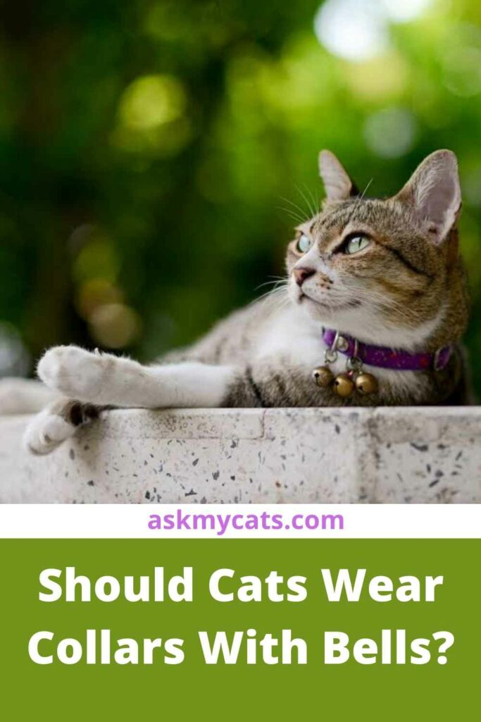 Should Cats Wear Collars With Bells?