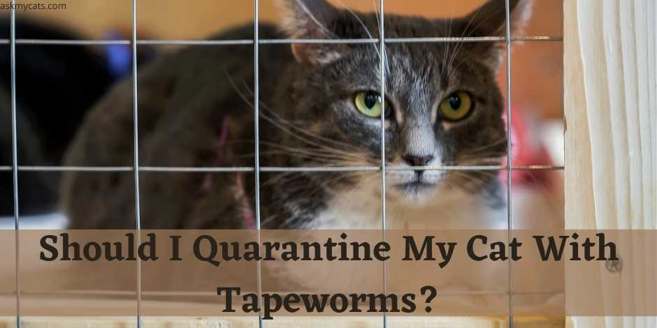 Should I Quarantine My Cat With Tapeworms?