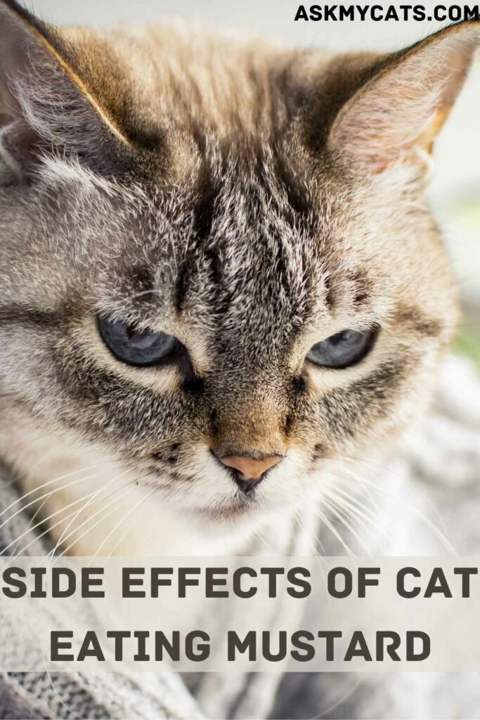Side Effects Of Cat Eating Mustard