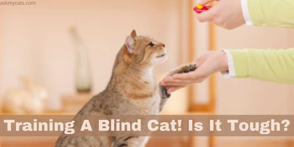 Training A Blind Cat! Is It Tough?